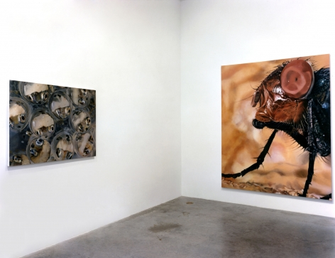 Judith Eisler, Installation view