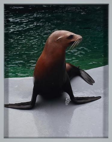 Elad Lassry Sea Lion, 2010