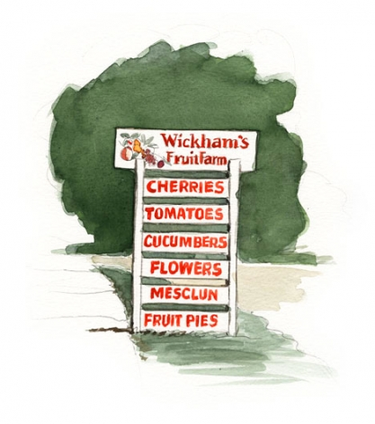 The Wickhams have farmed in Cutchogue since 1661. Their fruit trees are on diked land by the bay, whose warm waters hold off autumn frosts.