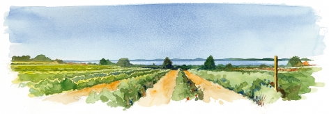 The Lathams have farmed in Orient since 1790. The  farm extends to Orient's oyster and scallop-filled bay.