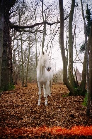 Decemberish, Sussex, 2017