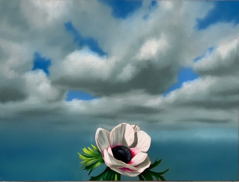 Bruce Cohen Anemone Against Cloudy Sky, 2020