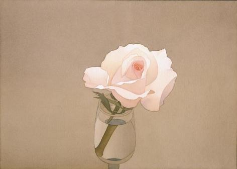 Pink Rose 1977