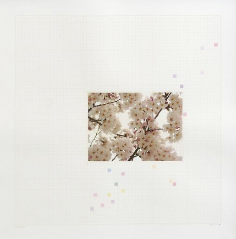 Darren Almond Sakura Chart #0.01, 2006