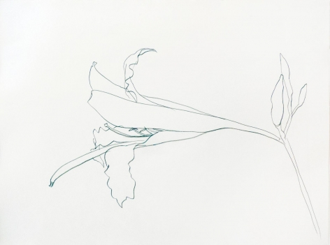 Ellsworth Kelly, Easter Lilly, 1984