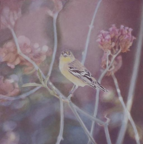 Goldfinch I 2005