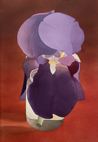 Mark Adams Bearded Iris, 1979