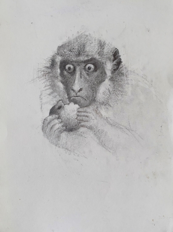 John Alexander Monkey Eating an Apple, 2019