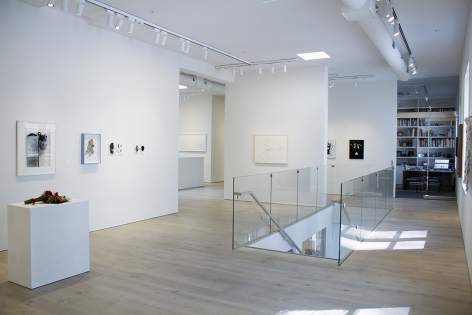 Installation view of Botánica, 2017