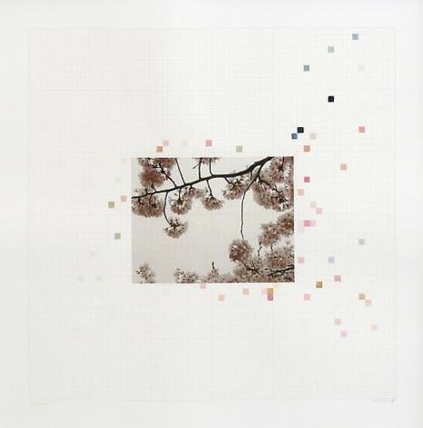 Darren Almond Sakura Chart #0.09, 2006