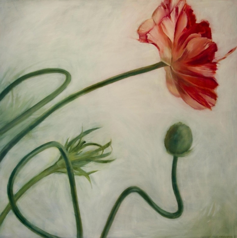 Clare Kirkconnell Ranunculust, 2020