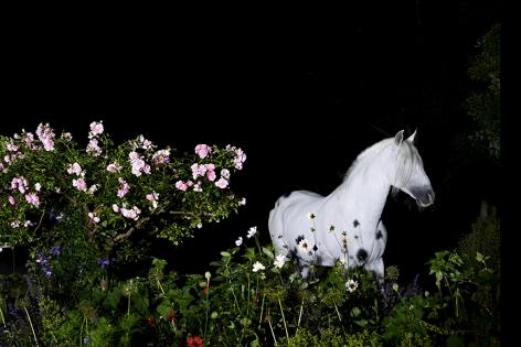 Night Scene, Number 1, Sussex, 2016