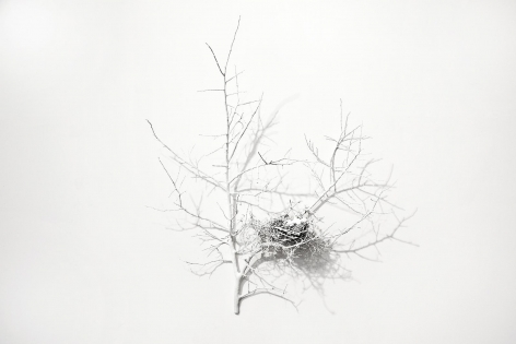A whir among white branches great and small,