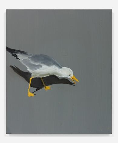 Tala Madani, Seagull