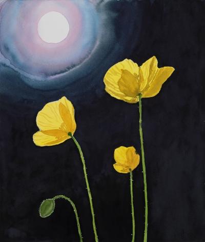 Tim Gardner, Yellow Poppies