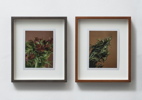 Sam Falls, Untitled (Life and Death, Peruvian Lilies), 2014
