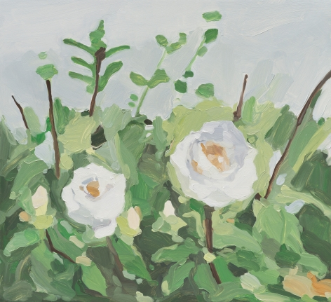 Maureen Gallace, White Roses, 2013