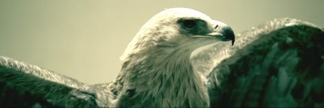 Doug Aitken, migration (empire), 2008