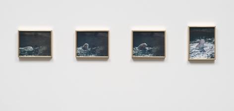 Elad Lassry, Porpoise, 2013