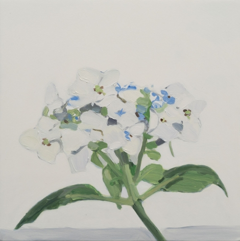 Maureen Gallace, White Flower July, 2015