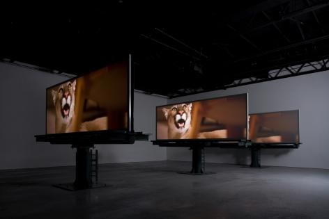 Doug Aitken, migration (empire), 2008, Installation view: 303 Gallery, 2008