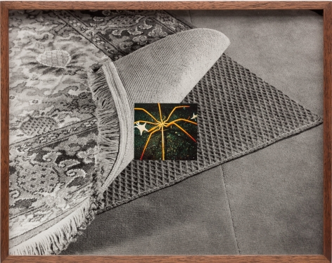 Elad Lassry, Untitled (Carpet, Sea Spider)
