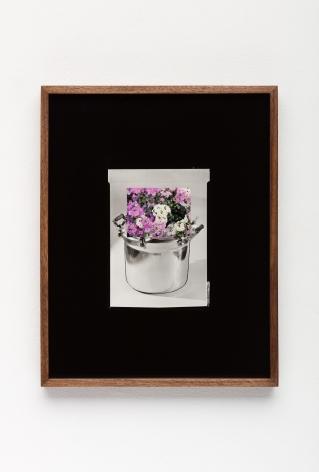 Elad Lassry, Untitled (Pot, Cosmos)