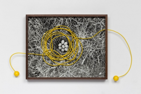 Elad Lassry, Untitled (Eggs), 2014