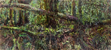 Fallen Trees and Undergrowth, Rafael Yaluff, 2012