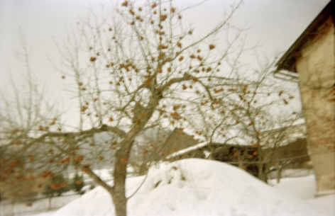 Wiesen, Apfelbaum, 2010