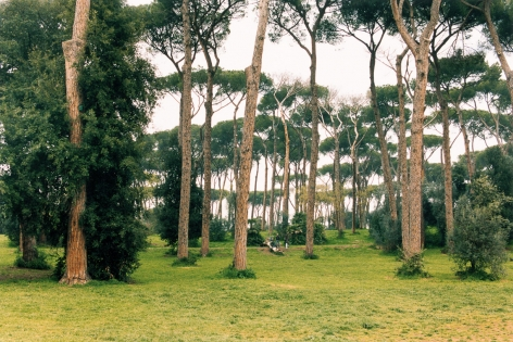 Pine, 2005