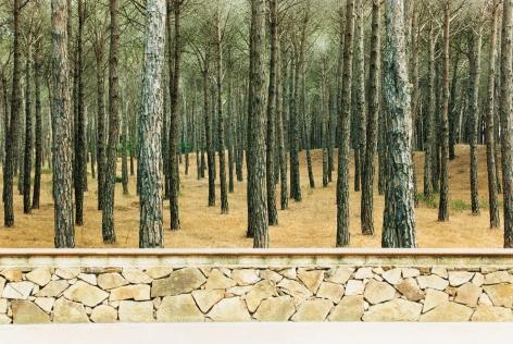 Schonung, 2005