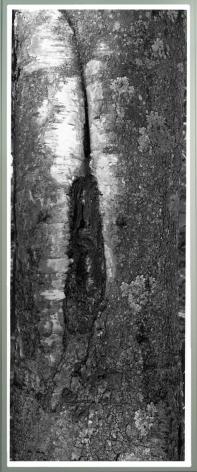 Tree XVI, Miles Gertler, 2001-2004