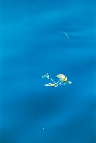 Fisch in Blau, 2016