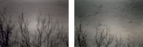 Vögel I + II, 2003