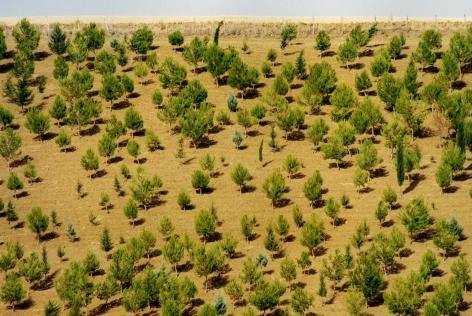 Bäume, 2004