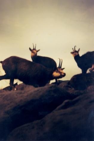 Hochländer, 1999