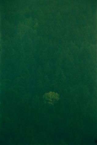 Baum im Wald, 2016