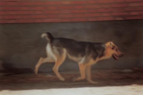 Toba, 2000