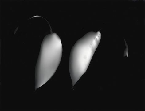 Ray Metzker Photogram, 1991