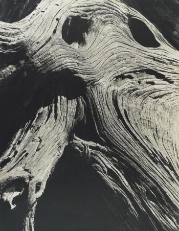 BRETT WESTON (American: 1911 – 1993), Cypress, Point Lobos (1929)