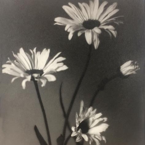 Taizo Kato still life of four flowers gelatin silver print 1924