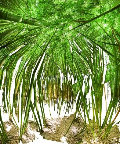 Raissa Venables, Bamboo Room, 2014