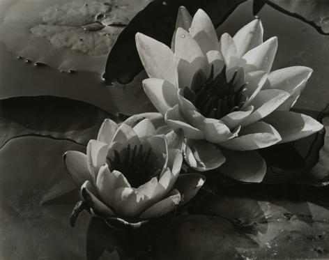 ALMA LAVENSON (American: 1897 -1989), Waterlilies.(1932)