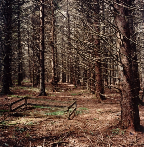 David Graham Woods and Garden, Placentia Island, ME, 1995-96