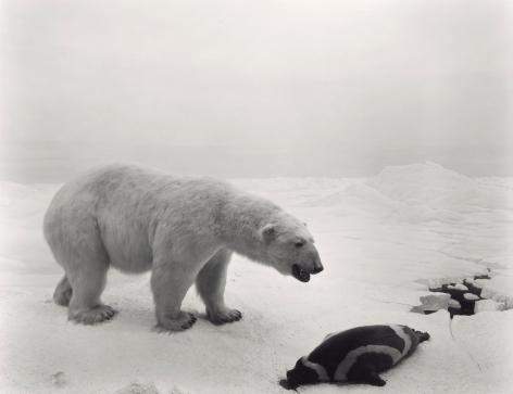 Hiroshi Sugimoto  Polar Bear, 1976