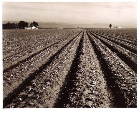 EDWARD WESTON (American: 1886 – 1958), Lettuce Ranch, Salinas, California (1934)
