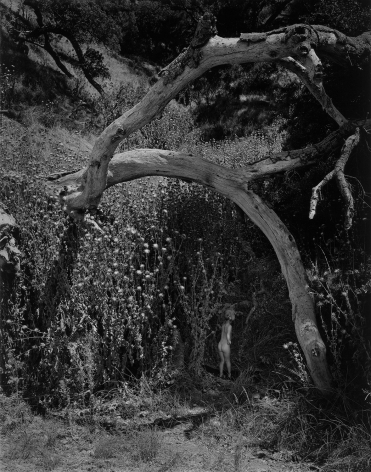 Child and the Unknown, 1955 gelatin silver print