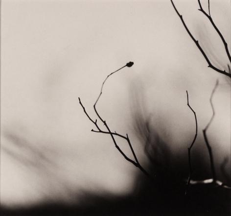 RALPH EUGENE MEATYARD (American: 1925 - 1972), Untitled, from Zen Twig series (1963) Vintage gelatin silver print