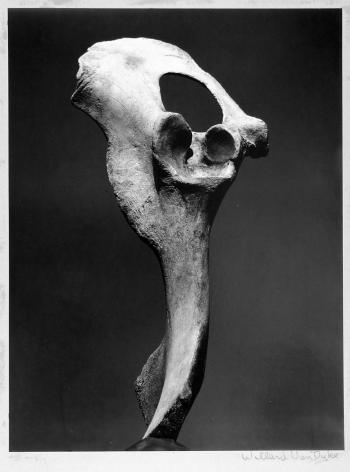 WILLARD VAN DYKE (American: 1906 – 1986), Bone and Sky 2 (1932)
